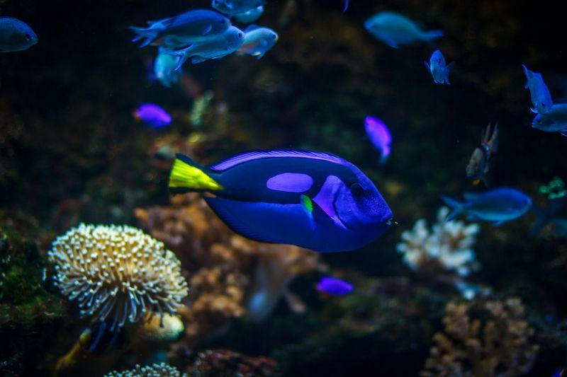 Океанариум Адлер: расписание, цены 2021, как добраться с адресом