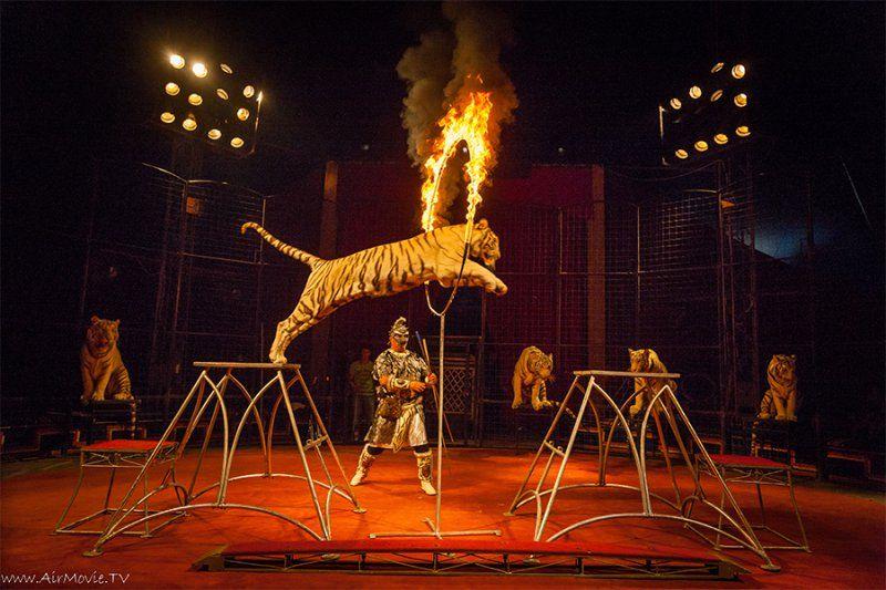 """Цирк """"Максимус"""" в Анапе, режим работы, телефон, как проехать, описание, отзывы."""