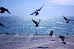 Отдых и лечение на Черноморском побережье Кавказа