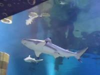 Океанариум-музей в Ейске – «Акулий риф» прямо на набережной, описание, как проехать, фотографии, цена билета, режим работы