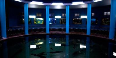 Аквариум-музей в Севастополе: в подводном мире. Как проехать, адрес, телефон, цена, режим работы