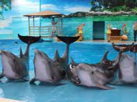 """Семья дельфинов в дельфинарии """"Nemo"""""""