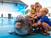 Знакомство с дельфином