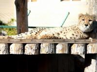 «Белый кенгуру» - интересный зоопарк в городе Сочи