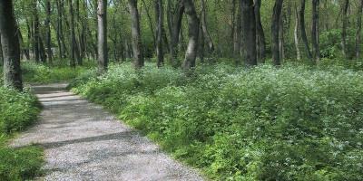 Цемесская роща природная достопримечательность Новороссийска – описание, отзывы туристов, как проехать, адрес, фотографии.