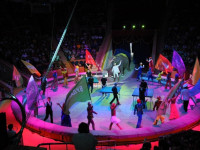 Главный цирк в Сочи - представления для взрослых и детей