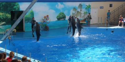 Дельфинарий «Немо» в станице Голубицкая – знакомство с морскими животными, описание, фотографии, режим работы, как проехать, цена.