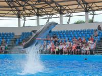 Дельфинарий «Немо» в станице Голубицкая – знакомство с морскими животными