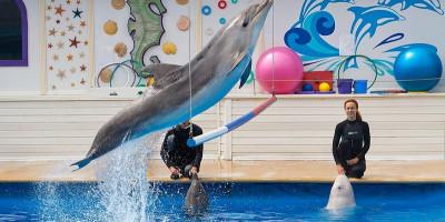 Дельфинарий в Артбухте в Севастополе, описание отзывы режим работы телефон адрес цена билетов.