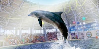 Дельфинарий в Евпатории как проехать, описание, отзывы, телефон, адрес, режим работы, цена.