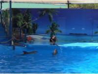 Дельфинарий поселка Кабардинка – заряд хорошего настроения