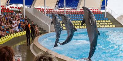 Дельфинарий «Коктебель» в Крыму как проехать стоимость описание телефон