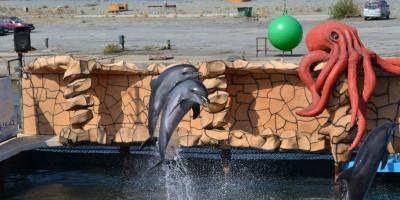 Дельфинарий в Большом Утрише отзывы туристов, адрес, телефон, цена билетов, как проехать, адрес.