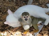 Кот и обезьянка