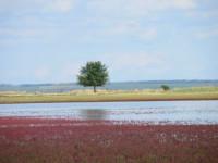 Ханское озеро – водоем с целебными грязями в городе Ейск