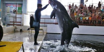 Карадагский дельфинарий в Феодосии, описание отзывы режим работы адрес телефон цена как проехать.