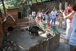 Контактный зоопарк в поселке Кабардинка описание, адрес, телефон, как проехать, фотографии, отзывы посетителей, история заведения.