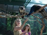 Контактный зоопарк в поселке Кабардинка описание