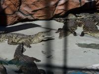 Крокодиловый вольер