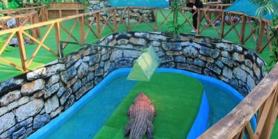 Крокодиловая ферма в Ейске – «Крокодиловый каньон» как проехать, телефон, режим работы, фотографии, отзывы туристов.