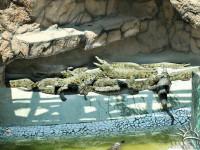 Крокодиловая ферма в станице Голубицкая – погружение в дикую природу