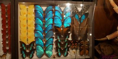 Уникальный Музей бабочек в городе Анапа, отзывы посетителей, подробное описание, адрес, как проехать, реальные фотографии.