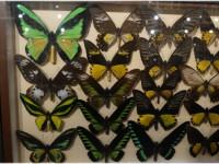 Уникальный Музей бабочек в городе Анапа