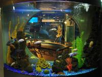 """Необычный аквариум в """"Океан Парке"""""""