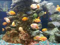 "Один из аквариумов ""Океан Парка"""