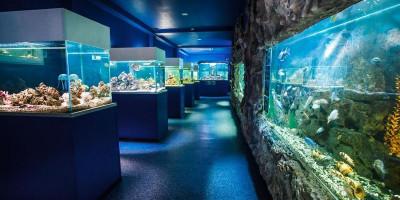 Океанариум «Подводный мир» в Кабардинке описание отзывы фото режим работы телефон адрес.