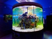 Океанариум «Подводный мир» в Кабардинке