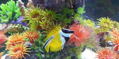 Океанариум «Риф» в Анапе, описание отзывы фото телефон режим работы как проехать адрес цена билета.