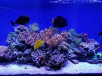 Океанариум «Риф» в Анапе