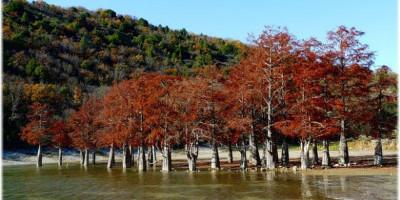 Озеро Сукко – место обитания кипарисов в районе Анапы – фотографии, история, как проехать, адрес, подробное описание, отзывы.