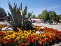 Экзотические растения в парке культуры и отдыха города Адлер