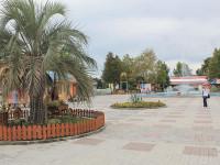 Пальма в парке культуры и отдыха