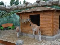Сафари парк «Балу» - зоопарк в Анапе