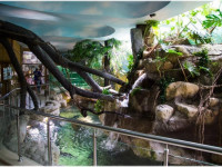 Комплекс «Тропическая Амазонка» в Лазаревском