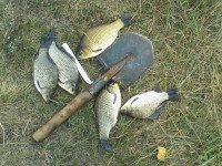 рыбалка в Вишневке